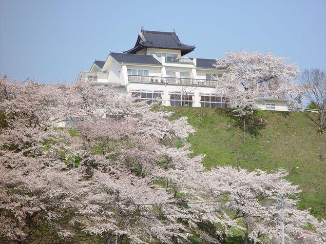 大衡城跡公園の桜