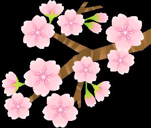 桜が開花しはじめます