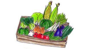 夏野菜詰め合わせ