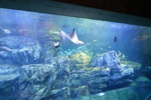 大分マリーンパレス水族館