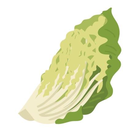 カットした白菜
